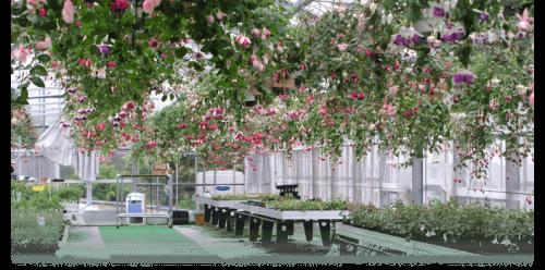 パルシェハーブ園大温室